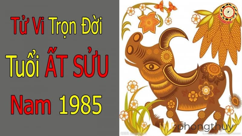 tu-vi-tron-doi-tuoi-at-suu-1985